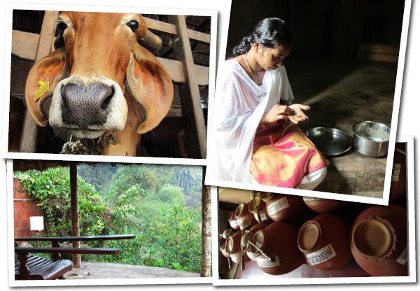 Rapport från ett ayurvediskt hälsocenter i Kerala